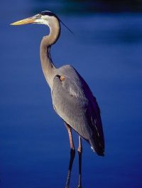 """Heron"": Why We Like It"