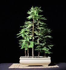 """Why We Like It: """"Bonsai Dawn Redwood Grove"""" by K. E. Duffin"""