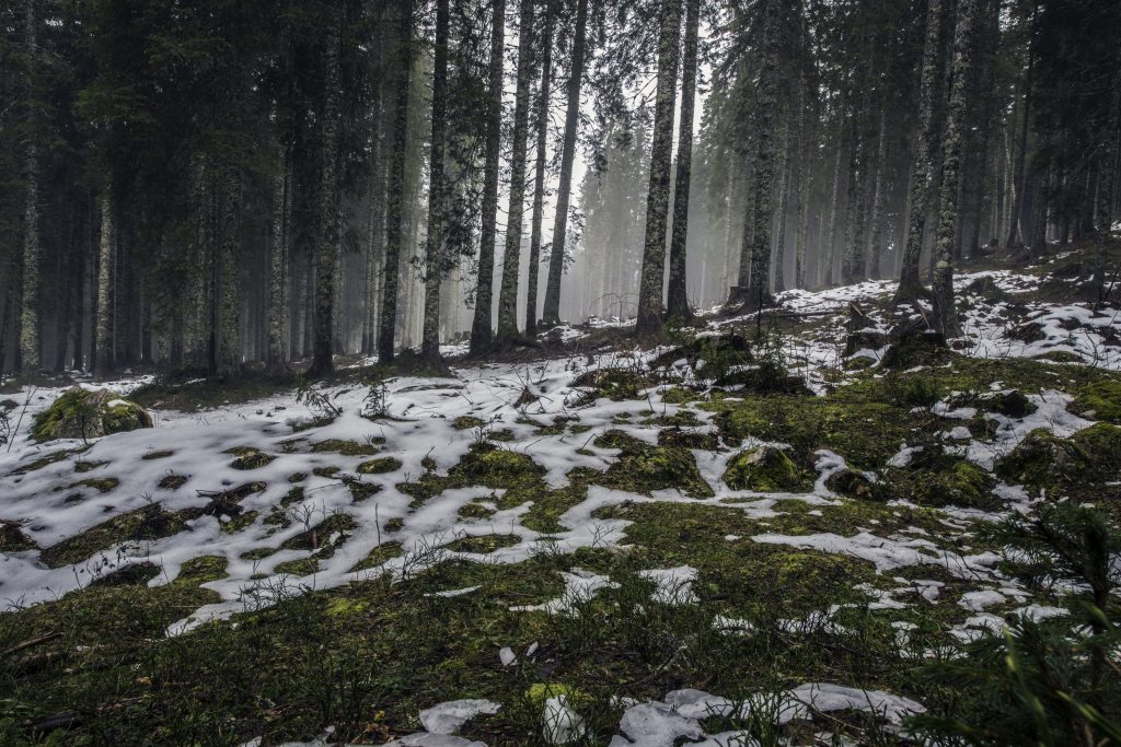 snow-thawing-nature-forest